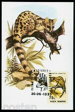 1993 Common genet/Wood mouse,Ginsterkatze,Chamois,animals,Romania,FDC maxi card