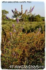 Vitex agnus-castus 'Chaste Tree' [Ex. Kato Gouves, Crete] 25+ SEEDS