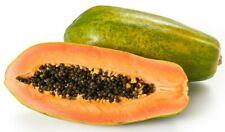 20 graines fraîches tropical-Honeydew melon arbre-fruits pawpaw Carica papaya