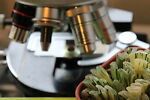 Microscopes and Succulents