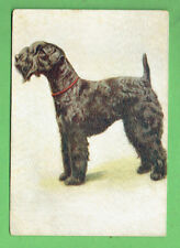 #O. 1936 Puppy Dog Cigarette Postcard #27 The Kerry Blue Terrier