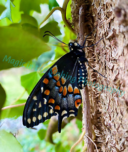 """""""BUTTERFLY BLISS"""" ORIGINAL PHOTO, CHOICE OF MATTE, SIGNED"""