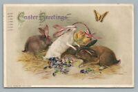Easter Bunny Rabbits & Butterfly JOHN WINSCH Samuel Schmucker—Antique Postcard
