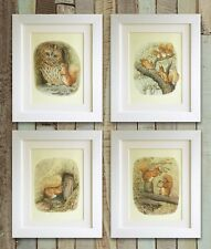 "SET OF 4 Beatrix Potter Squirrel & Owl Prints, 5""x7"" UNFRAMED, Baby Picture Gift"