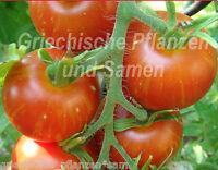 🔥 🍅 Mr. Stripey Tomate gelb/rot gestreifte Tomaten 10 frische Samen Balkon