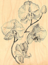 Orchids Flower Wood Mounted Rubber Stamp Impression Obsession Melissa Gordon New
