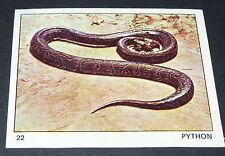N°22 PYTHON SERPENT PANINI 1970 TOUS LES ANIMAUX EDITIONS DE LA TOUR