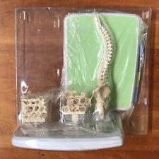 NEW Spine Backbone Pharmaceutical Sale Rep Medical Anatomical Model Amgen Prolia