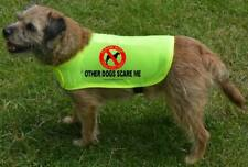 Please Keep Your Dog Away Other Dogs scare me Yellow dog coat nervous, timid 837