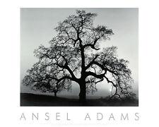 ANSEL ADAMS - Oak Tree, Sunset City, California Art Print Photo Embossed Poster