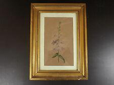 belle Aquarelle, Herbier, signée L. G. & datée 15 juillet 1889
