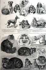 Crystyal Palace CAT SHOW ROYAL AQUARIUM TOY DOG SHOW 1886 Antique Matted Print