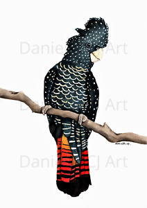 Watercolour Red Tailed Black Cockatoo Print - Australian bird prints