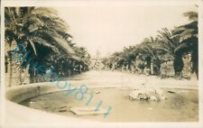 More details for  malta palm gardens floriana taken by officer off hms ramillies oct 1929 unique