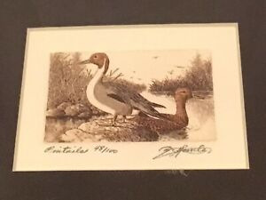 Limited Edition Etching Pintails Signed David Hunter Florida Artist   Ducks