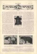 1905 John D Rockefeller New car Lakewood Largest Bear In The World A Stone Expdn
