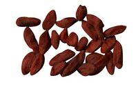 100 Samen der Gojipflanze Lycium chinense, Goji-Beere oder Wolfsbeere, Goji