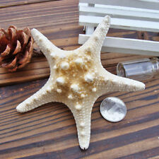 2PCS Natural Starfish Sea Star Shell DIY Aquarium Landscape Making Craft Decors