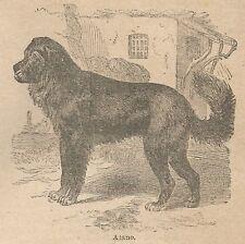 A0908 Alano - Stampa Antica del 1911 - Xilografia