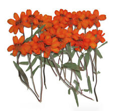 Pressed flowers, 20pcs orange Zinnia for art craft card making scrapbooking