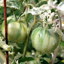 Variegated Tomato Seeds Rare Beautiful Leaves Organic Varigated Heirloom USA
