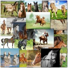 Pack Of 20 Mixed Horse Lovers Birthday Blank Greeting Cards Female Male