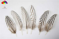 Natural Pheasant Tail Feathers 4-6 inch/10-15 cm 10-100pcs Carnival Diy costume