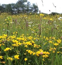 WILDFLOWER & GRASS SEED MEADOW MIX FOR DRY, SANDY SOILS 1kg