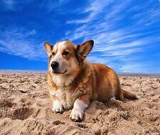 WELCH CORGI DOG ON THE BEACH COMPUTER MOUSE PAD  9 X 7