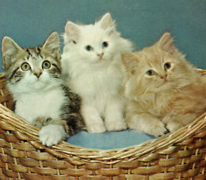 Three Kittens in a Basket Tabby Ginger White Cats Greeting ME Vintage Postcard
