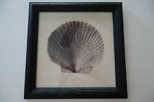 ABC'S Revenge - Production Used - Framed Nautical Sea-Shell Picture Josh Bowman