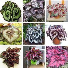 US- 100PCS unique 9 colors Begonia flower seeds flowers potted bonsai garden