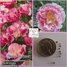 25 Californian Poppy Appleblossom Pink Seeds(Eschscholzia californica)