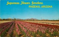 Chrome Postcard AZ I416 South Phoenix Japanese Flower Gardens Baseline Road