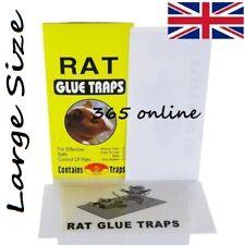 Rat Glue,  Mouse Glue,   Mice Glue,  Sticky Glue
