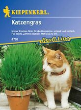 Kiepenkerl - Hierba para gatos 4701 Olla Balcón Altura 10cm fresco doméstico