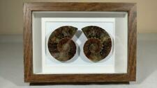 More details for framed fossil 50mm ammonite pair - cut and polished - cretaceous - madagascar