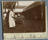 Tunisie, Le Marché arabe aux Halles de Tunis  Vintage citrate print. Photo J. Bo