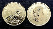 Canada 2020 Black-Footed Ferret  Loonie Specimen Gem UNC Dollar!!