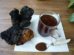 Tea Chaga Inonotus obliquus with Sagan Dayla 100 gr