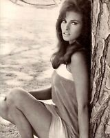 "RAQUEL WELCH   8/"" X 10/"" glossy photo reprint"