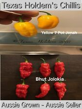 40 Chilli Seeds - Trinidad Yellow 7 Pot Jonah and Bhut Jolokias.  HOT Chili