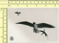 062 Birds Flying Motion Seagulls Abstract Surreal Artistic Scene vintage photo