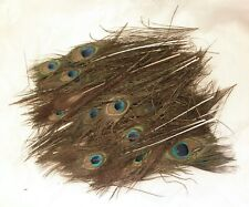 Bulk mixed feathers -Peacock 1st & 2nd quality- Free shipping from CA