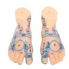 Foot  Zone Massage Acupuncture Point Model Feet ology Teaching Tool