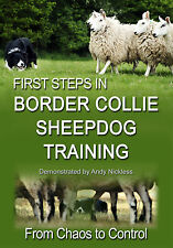 First Steps in BORDER COLLIE SHEEPDOG TRAINING Herding