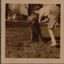 Vintage Photograph 1954 Girls Fashion Poodle Dog/Puppy Baltimore Maryland Photo