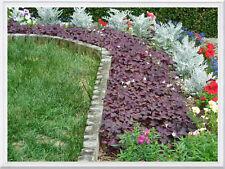 12-OXALIS PURPLE SHAMROCK BULBS - GOOD LUCK PLANT (PLUS 6 BONUS BULBS) 50% MORE