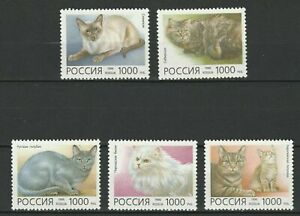 Russia 1996 Animals, Pets, Cats 5 MNH stamps