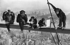 Stampa incorniciata – Scimpanzè Pranzo in groppa a un grattacielo (ANIMALE BUFFO Classic Foto Art)